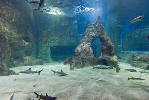bassins aux requins